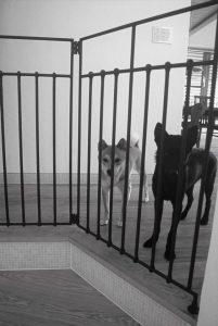 アイアン手すりと犬